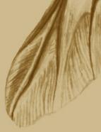 wingend